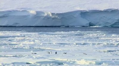 Penguins, Ronne Ice Shelf, Antarctica
