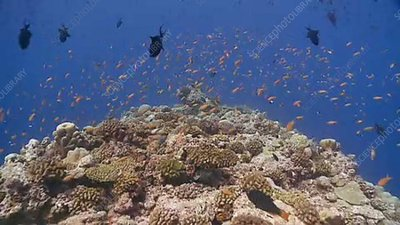 Mixed community of fish on a reef