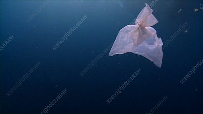 Plastic bags floating in the sea