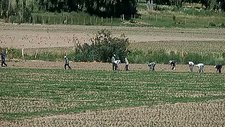 Farm workers in Argentina