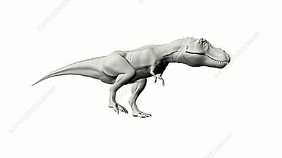 T-Rex flat shaded animation