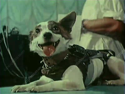 Strelka, Soviet space dog