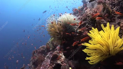 Coral reef wall with fish