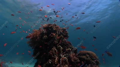 Coral outcrop with fish