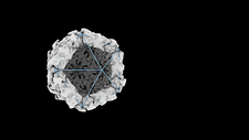 Building an icosahedral virus