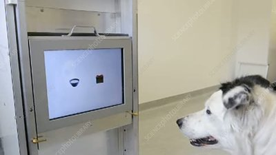 Dog intelligence testing