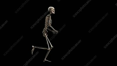 Female skeleton, running