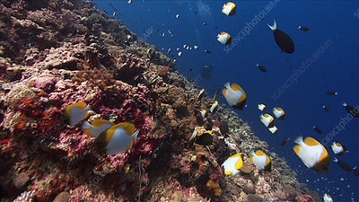 Busy coral reef