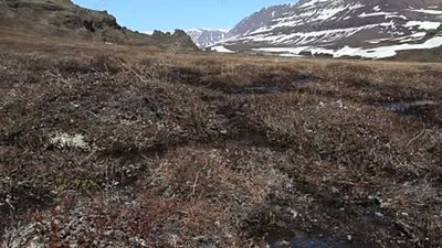 Arctic tundra in early spring