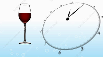 Time and Metabolism of Alcohol