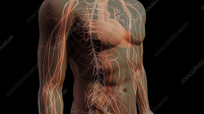 Nerves of the Central Nervous System