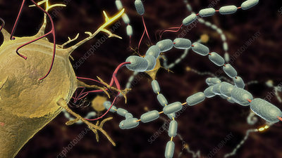 Action through CNS neuron cell body