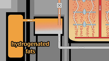 Hydrogenation of vegetable fats