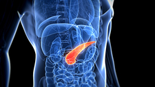 Healthy pancreas