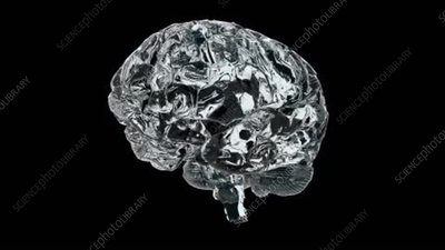 Human Brain, animation