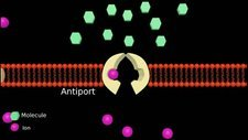 Membrane transport, animation