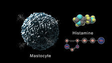 Mastocyte releasing histamine, animation