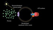 ATP synthase producing ATP, animation