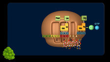 Tetracycline drug action, animation