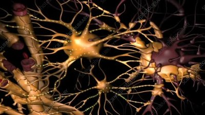 Glial cells and neurons, animation