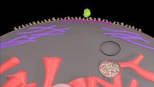 Phagocytosis, animation