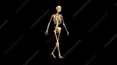 Walking gold skeleton