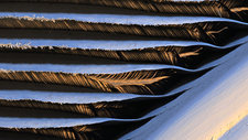 Falcon feather, SEM