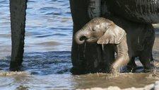 Baby elephant in waterhole