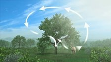 Land carbon cycle, animation