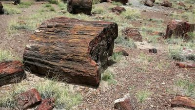 Fossilised logs in Petrified Forest