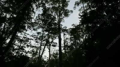 Trees in rainforest