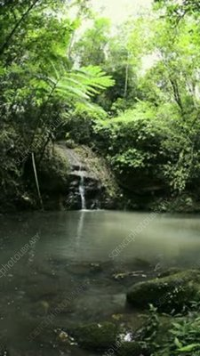 Small rainforest lake