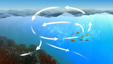 Oceanic carbon cycle, animation