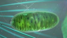 Mitochondrion in a cell