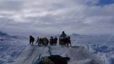 Husky dog sled team, Greenland
