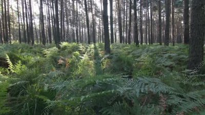 Forest and ferns timelapse