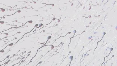 Sperm, animation