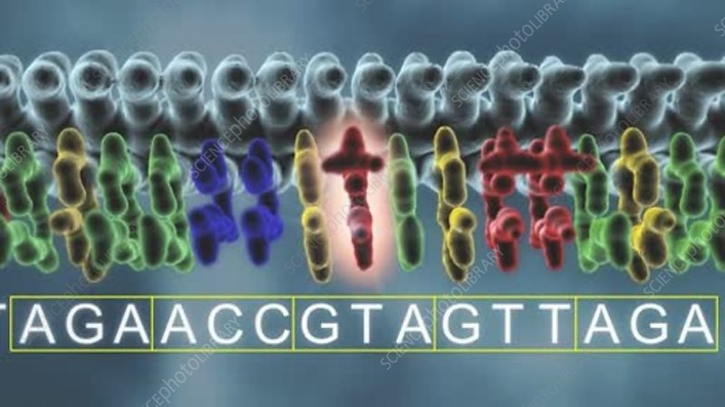DNA missense point mutation, animation - Stock Video Clip ...