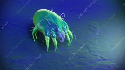 Dust mite walking on a surface, animation