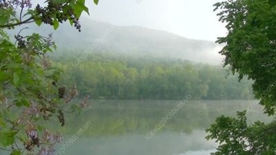 Morning mist over a lake