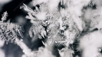 Dendritic ice crystal formation