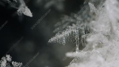 Dendritic ice crystal formation, time-lapse footage