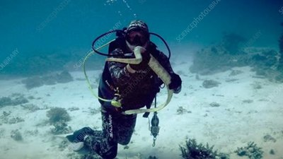 Diver with sea snake