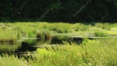 Pond with grasses