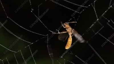Insect escaping from a spider's web