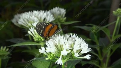 Tropical butterfly on flower