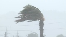 Palm tree during Typhoon Vongfong