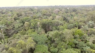 Flying over rainforest