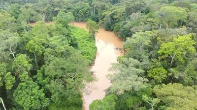 Tropical rainforest, aerial
