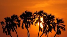 Tropical sunset behind palm trees